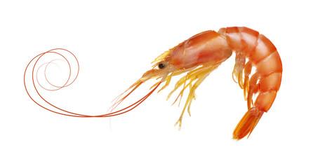 tiger shrimp isolated on white background