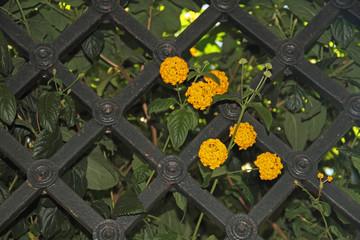 Gitter mit Blumen