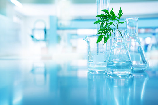 green leave in biotechnology science research laboratory with flask beaker cylinder and water in blue  background