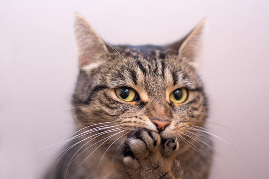 Cat surprised - paw covers mouth
