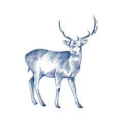 Hand Drawn deer Sketch Symbol isolated on white background. Vector of animals elements In Trendy Style