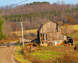 weathered barn with horses and Amish buggy