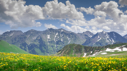 beautiful mountains  scenery with flowers