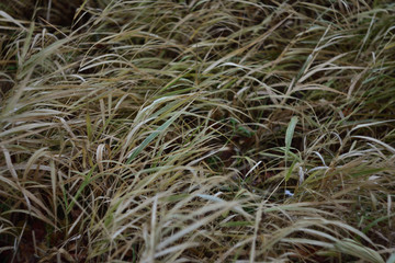 closeup of dry grass