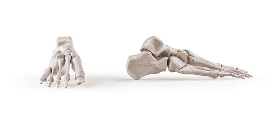 Human foot skeleton bones isolated