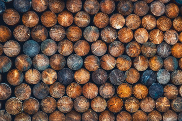 Abstract photo of a pile of natural wooden round logs background.