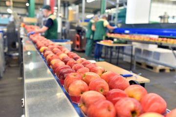 Äpfel auf dem Fliessband in einer Lebensmittelfabrik zum Versand und einpacken - Closeup mit Arbeitern im Hintergrund // Apples on the assembly line in a food factory for shipping and packing