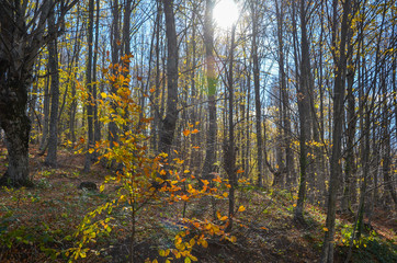 Beautiful forest landscape with vibrant Autumn Fall season colors