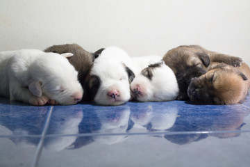 6 cute puppies are falling asleep