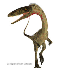 Coelophysis Dinosaur Front with Font - Coelophysis was a carnivorous theropod dinosaur that lived in North America during the Triassic Period.