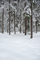 Winter landscape. Snowy boreal forest in Finland.