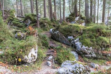 Zauberwald am Hintersee in Bayern mit Felsblöcken aus einem Bergsturz. Ramsau bei Berchtesgaden.