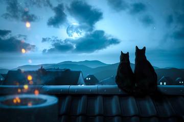 Zwei Katzen sitzen nachts auf einem Dach