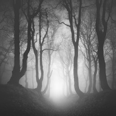 Sunken Lane through Haunted Forest of Spooky Gnarled Beech Trees in Thick Fog