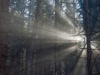 Mysterious Forest, Sun shining through fog with beautiful light rays