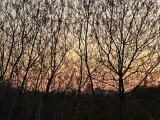 Evening sky with a golden glow seen through silhouetted bare trees