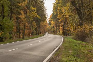 Asfaltowa droga przez jesienny las.