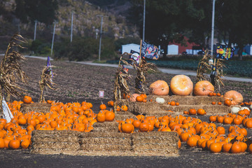 View of a pumpkin farm with pumpkin market on Pacific Coast Highway 1, California, United States