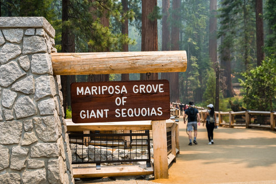 Entrance to the newly reopened Mariposa Grove of Giant Sequoias, Yosemite National Park, California