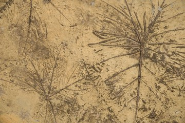leaves line in cement on brown background