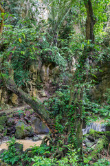 stormy creek in the jungle Phuket, Thailand