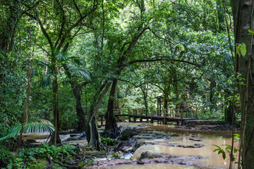 wooden bridge over a stormy creek in jungle Phuket, Thailand