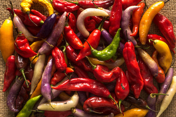 Canvas Prints Hot chili peppers Peruvian hot pepper called Limo Pepper.
