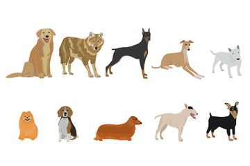 set of dog breeds on white background