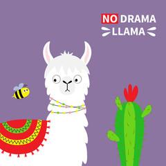 Llama alpaca face, bee, cactus. No drama. Childish baby collection. Cute cartoon funny kawaii character. T-shirt, greeting card, poster template print. Flat design. Violet background.