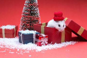 Cute christmas hamster inside gift box near christmas tree