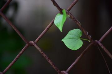 Heart shaped leaf background