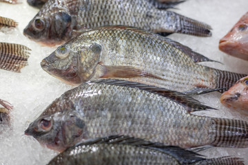 Raw Tilapia fish for sale.