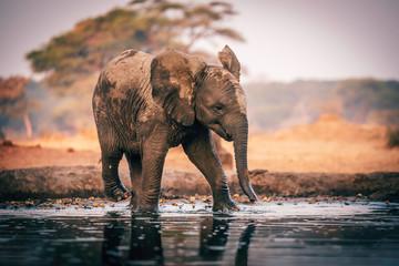 Elefantenbaby am Wasserloch, Senyati Safari Camp, Botswana Wall mural