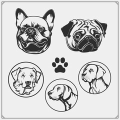 Set of dogs portraits. French Bulldog, Pug and Golden Retriever. Cute friendly pets characters. Emblems for Pets Shop. Print design for t-shirts.