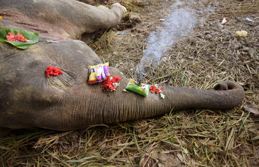 Incense sticks and flowers offered by people are seen on the carcass of a male elephant, who according to forest officials was electrocuted in a paddy field, at Gendhali Bebejia village in Nagaon
