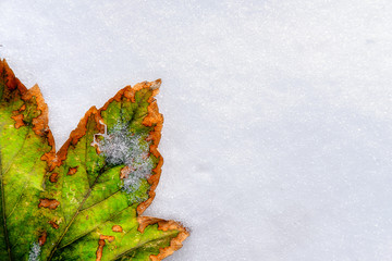 bright autumn green leaf with orange edges lies on clean white snow