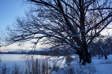 Bare big tree on the background of a frozen lake and blue sky