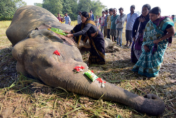 A woman prays as she touches the carcass of a male elephant, who according to forest officials was electrocuted in a paddy field, at Gendhali Bebejia village in Nagaon