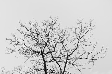 Bare tree in black and white - A closeup image of a bare tree in black and white during the fall season.