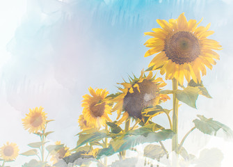 Landscape with sunflowers in summer painted with brush on white background