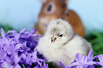 Easter Chick with Bunnie