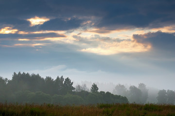 Landscape with mist on the field.