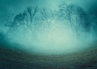 Creepy trees in the fog