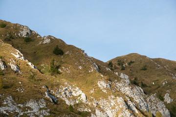 Camosci sulle creste del Monte Guglielmo, Prealpi Bresciane
