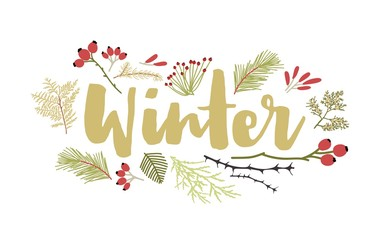 Winter lettering handwritten with cursive calligraphic font and decorated by coniferous tree branches and berries. Decorative seasonal composition. Flat colorful natural vector illustration. Fotoväggar