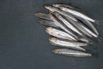 European anchovy on black background