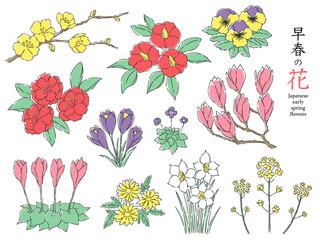 早春花セット