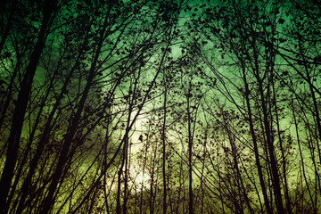 vintage mysterious forest with tree branches