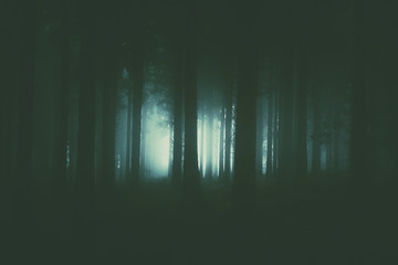 scary forest with dark atmosphere