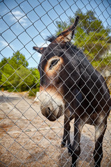 Picture of a donkey behind a mesh fence